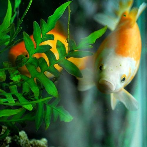 Fishies001.jpg